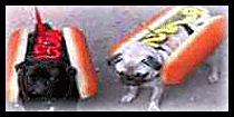 Hot Dog : Bonfire Night Food